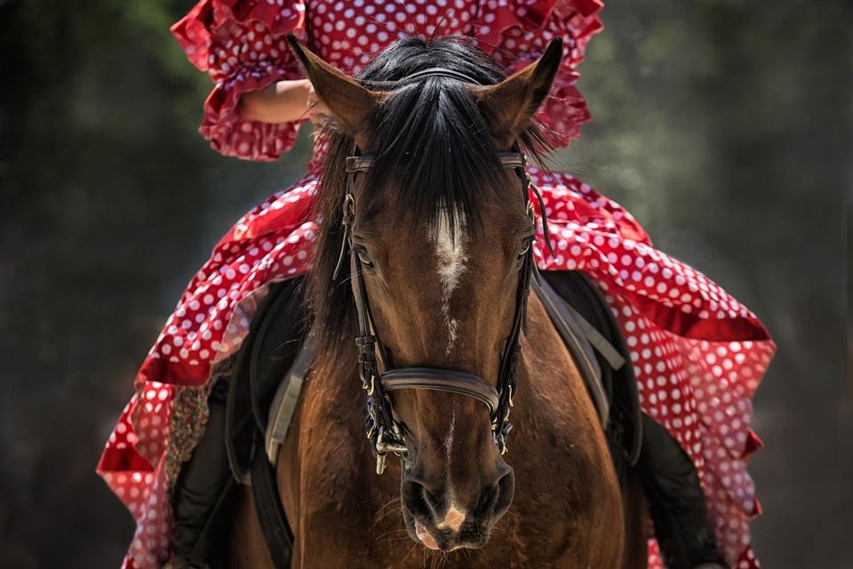 Tradiciones españolas caballo en feria