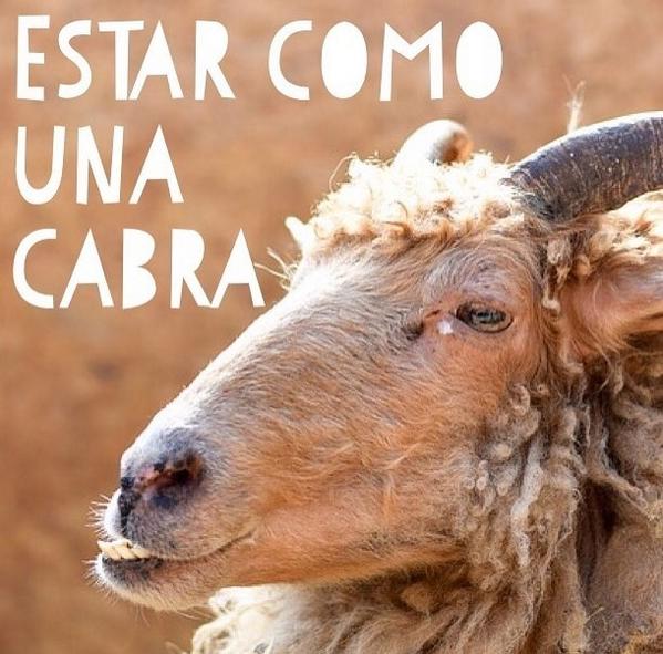 испанские идиомы Estar Como Una Cabra Dencanto Community