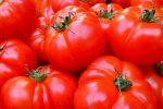 La Tomatina tomates
