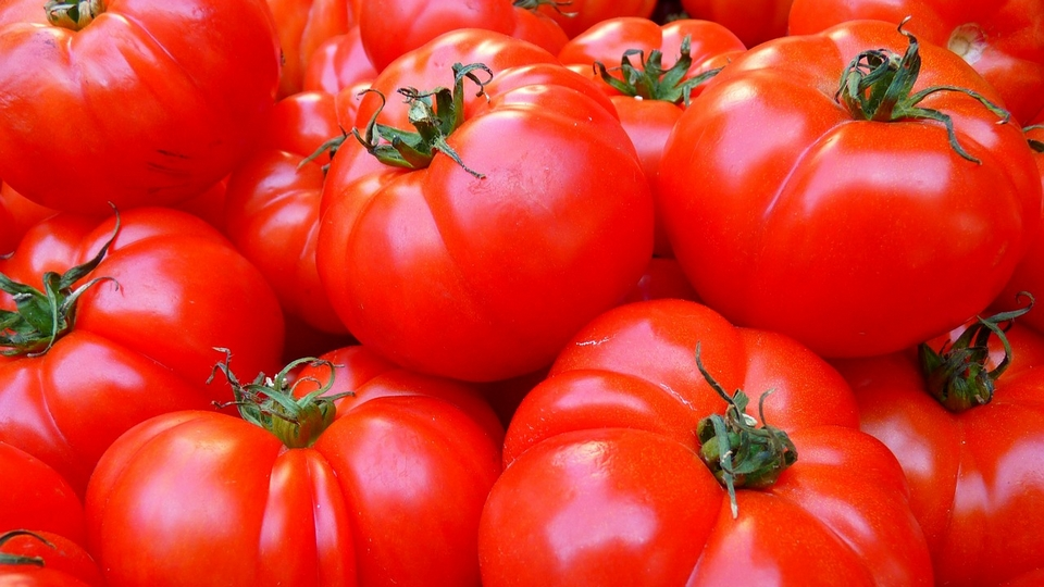 festivals in spain la tomatina